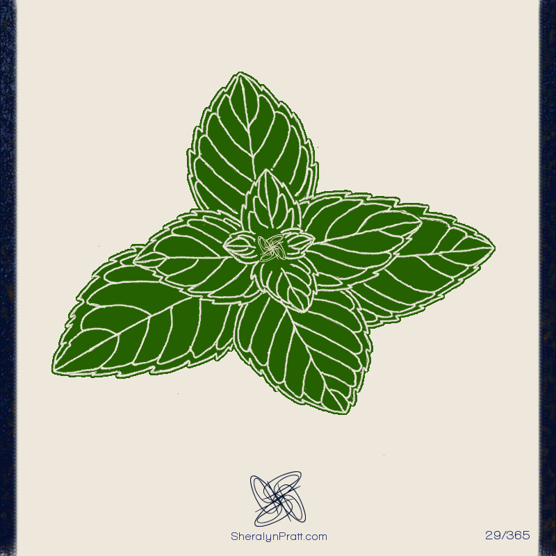 Sheralyn Pratt 29/365 Mint leaves