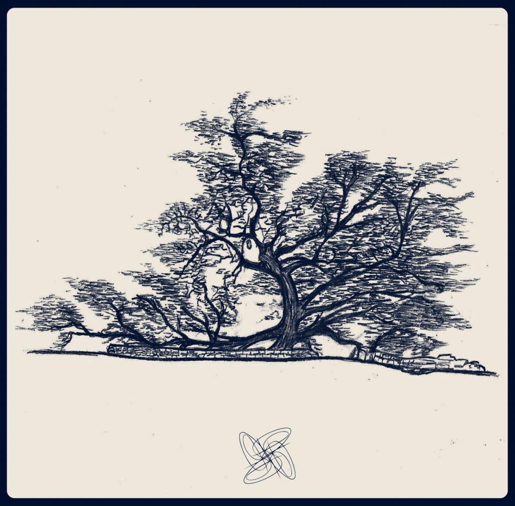 Tree of Life sketch by Sheralyn Pratt